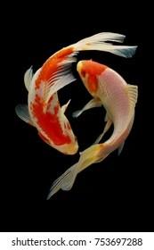 Koi Fish Pics : Stock, Images, Shutterstock