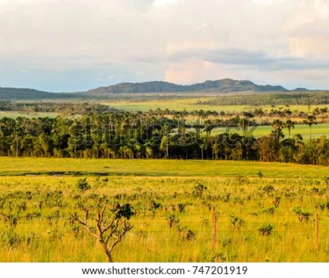 Landscape Of The Brazilian Cerrado In The Chapada Dos Veadeiros Goias Brazil