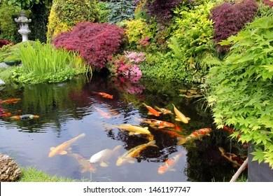 https www shutterstock com image photo los angelescalifornia07192019 photo unique style pond 1461197747