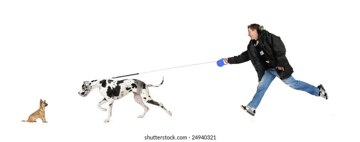 Dog Pulling Leash Images, Stock Photos & Vectors