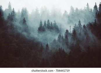 Forest Background Stock Photos Images & Photography Shutterstock