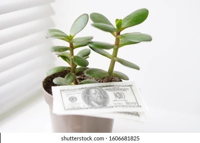 Money Plant Images, Stock Photos & Vectors | Shutterstock