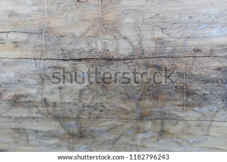 Wood With Wormholes