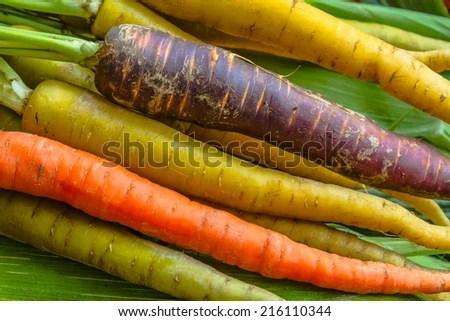 Organic Heirloom Carrot Varieties Purple Yellow Stock Photo (Edit Now) 216110344 - Shutterstock