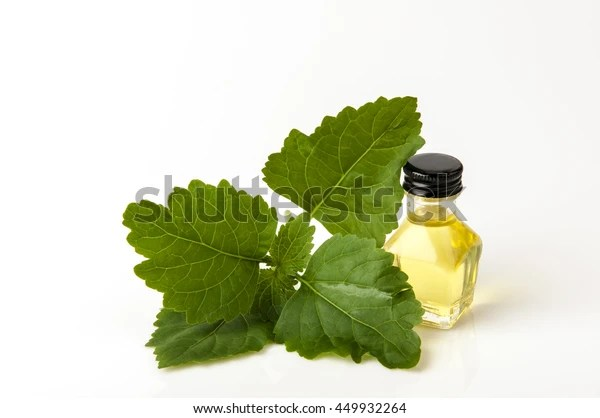 Patchouli Essential Oil Stock Photo (Edit Now) 449932264
