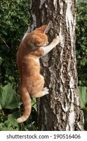 Cat Climbing Tree Images Stock Photos Vectors Shutterstock