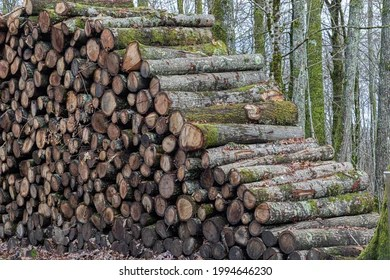 Even considering carbon stored in harvested wood products, unmanaged northern hardwood forests will sequester a minimum of 39% more carbon than the active management options. Northern Hardwood Forest Hd Stock Images Shutterstock