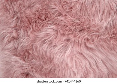 Girly Animal Print Wallpapers Fur Images Stock Photos Amp Vectors Shutterstock