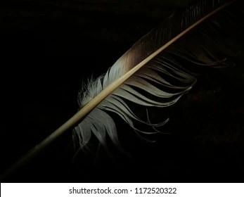 https www shutterstock com image photo plume sur fond noir 1172520322