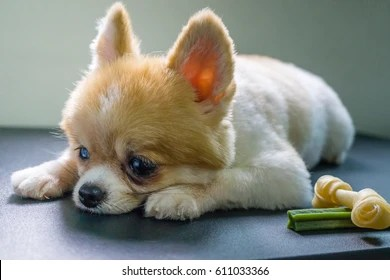 depressed dog images stock