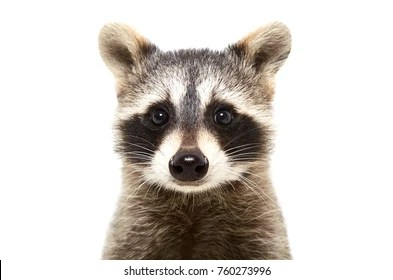 baby animals images stock