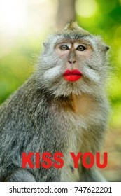 Monkey With Red Lips : monkey, Monkey, Stock, Images, Shutterstock