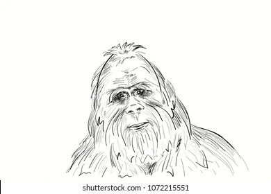 Theory Of Evolution Images, Stock Photos & Vectors