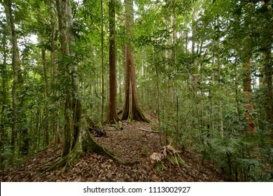 In case you're missing the forest for the trees, here are a few reminders why woodlands are wonderful. Class 1 Protected Forest Reserve Images Stock Photos Vectors Shutterstock