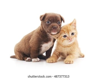 puppy and kitten images