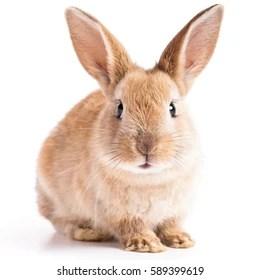 rabbit images stock photos