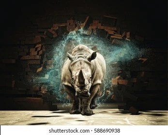 rhino images stock photos