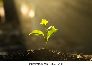 Cute Doodle Wallpaper Hd Growing Plant Images Stock Photos Amp Vectors Shutterstock
