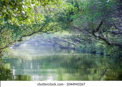 Mangrove Tunnel Images Stock Photos Vectors Shutterstock
