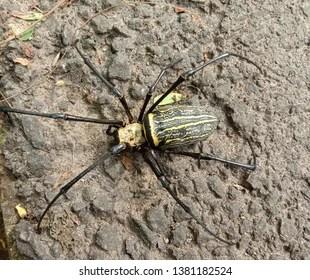 spider excavator images stock