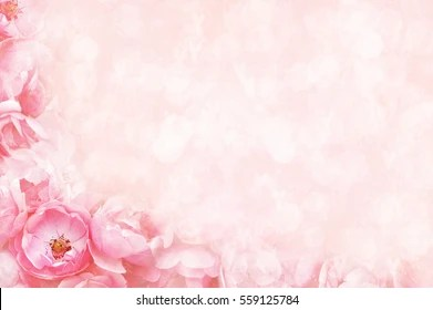 Roses Background Images Stock Photos Amp Vectors Shutterstock