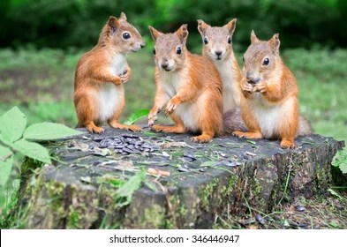 squirrel family images stock