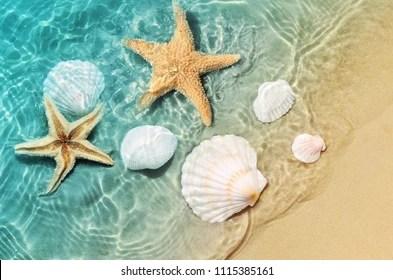 seashells images stock photos