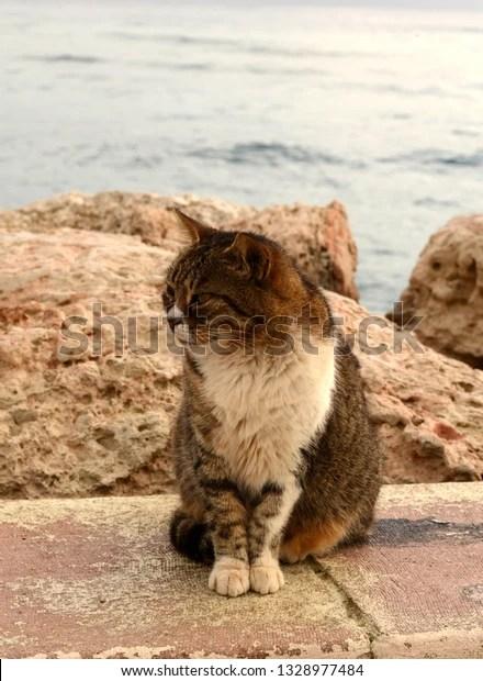 Sad Fat Cat : Street, Basking, Stock, Photo, (Edit, 1328977484