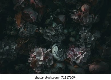 dark gothic flowers stock