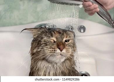 cat bath images stock