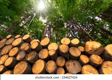 The cover pictures were provided by: Forest Products Images Stock Photos Vectors Shutterstock
