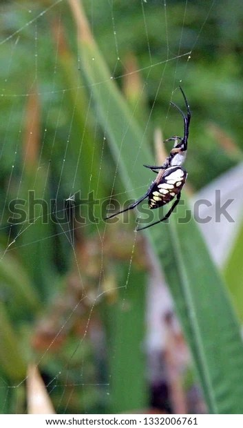 yellow and black trampoline spider
