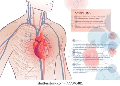 anatomical heart diagram 1998 mitsubishi montero sport wiring anatomy images stock photos vectors shutterstock 3d illustration of the human circulatory vascular system template man body parts