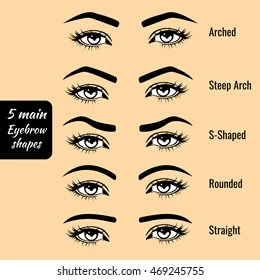 picture Perfect Eyebrow Shape Pictures https www shutterstock com image vector 5 basic eyebrow shape types vector 469245755
