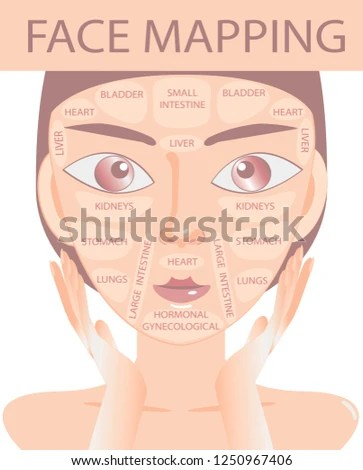 acne face diagram house electricity wiring map vector illustration beauty stock royalty free of woman what your skin is telling