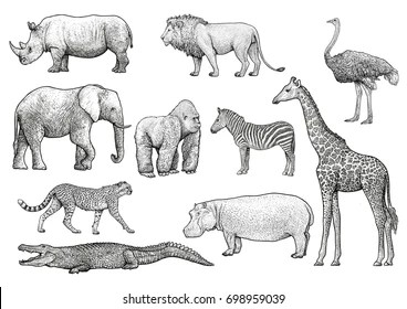 Wild Animal Drawings Images Stock Photos Vectors Shutterstock