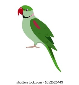 green parrot images stock