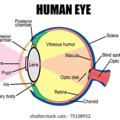 Structure Of Human Eye With Diagram 400ex Wiring Images Stock Photos Vectors Shutterstock Anatomy Vector Illustration For Basic Medical Education Clinics
