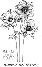 Anemone Flower Drawing : anemone, flower, drawing, Anemone, Flowers, Drawing, Images,, Stock, Photos, Vectors, Shutterstock