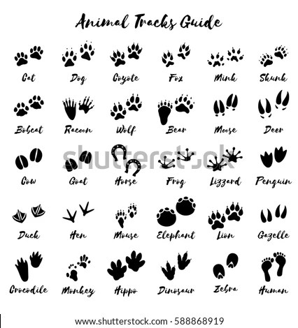 Animal Tracks Foot Print Guide Vector 스톡 벡터(사용료 없음