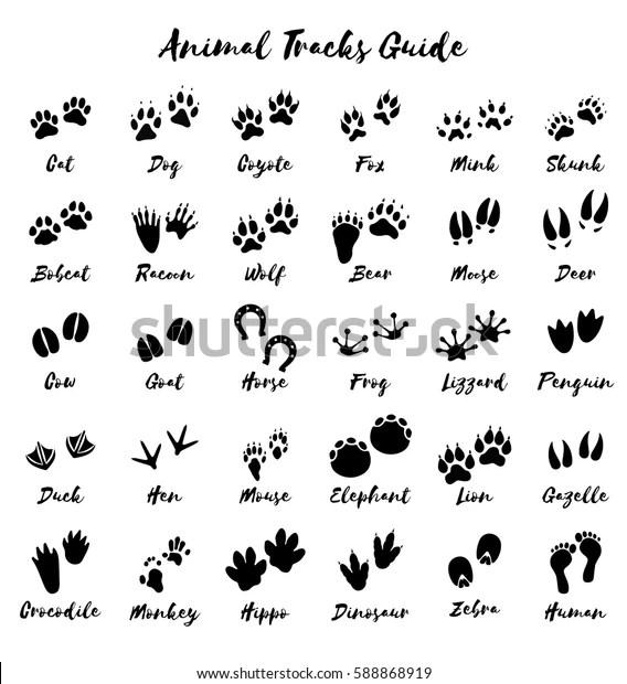 Animal Tracks Foot Print Guide Vector Stok Vektör