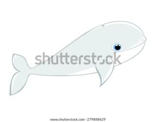 whale beluga cartoon vector