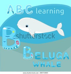 Baby Beluga Whale Vector Illustration Cute Stock Vector Royalty Free 288733805