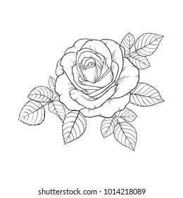 Rose Drawing Images Stock Photos Amp Vectors Shutterstock