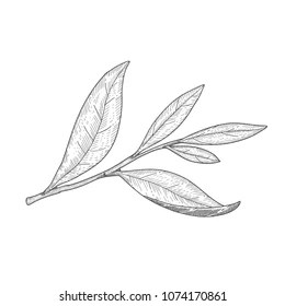 Plant Line Drawing Images, Stock Photos & Vectors