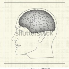 Inside Skull Diagram Pir Override Switch Wiring Brain Cerebral Hemisphere Human Head Stock Vector Royalty Profile