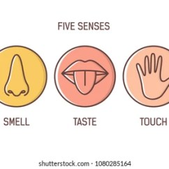 Five Senses Diagram 2016 Ford F150 Factory Stereo Wiring Sense Organ Images Stock Photos Vectors Shutterstock Bundle Of 5 Hearing Smell Taste Touch Vision Set