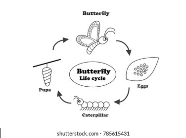Drawing Butterfly Images, Stock Photos & Vectors