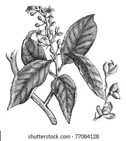 Encyclopedia of Plants Images, Stock Photos & Vectors