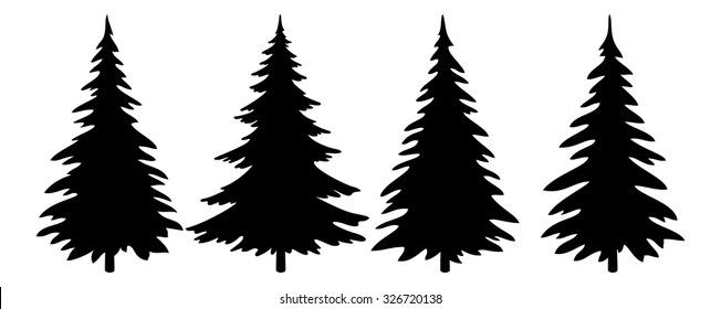 evergreen tree vector stock